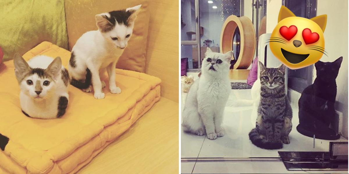 Cat Cafe in Adliya