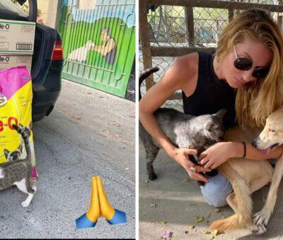 Bahrain Animal Rescue Centre