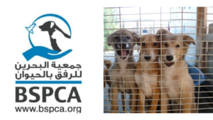 BSPCA and dogs